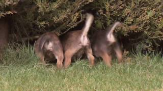 Dog Training Dvd - Keith Mathews 'the Dog Guru' - Calmness Leads To Reward