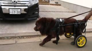 1/26 車椅子初乗りの様子です。