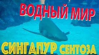 видео Достопримечательности Владивостока. Попутчики из Находки во Владивосток.