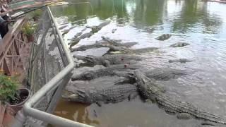 Crocodile Farm, Suoi Tien Park, Ho Chi Minh City, Vietnam