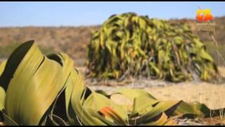 Deserto do Namibe 2