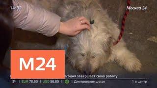 Кошки и собаки из столичных приютов ищут встречи с новыми хозяевами - Москва 24
