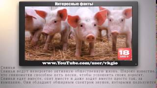 Показать видео про животных. Топ 10 Самые умные животные планеты