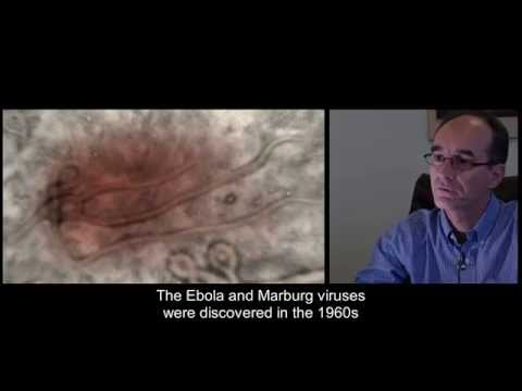 Ebola : The history of Ebola epidemics