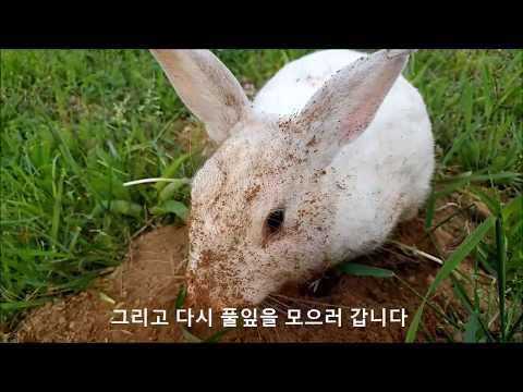 공원 엄마 토끼의 아기 낳을 굴 파기