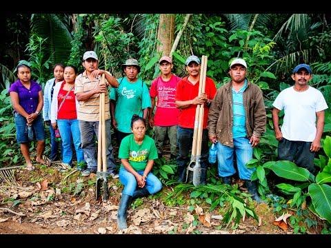 Trio Cacao Farmers Association