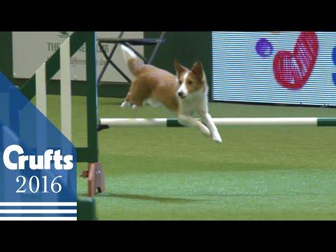 Agility - Crufts Team - Small Final   Crufts 2016