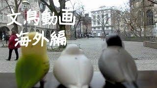 文鳥動画 フィギュアで海外撮影に行く(フランス・ベルギー編)!? thumbnail