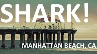 Great White Shark in Manhattan Beach, CA - May 2014