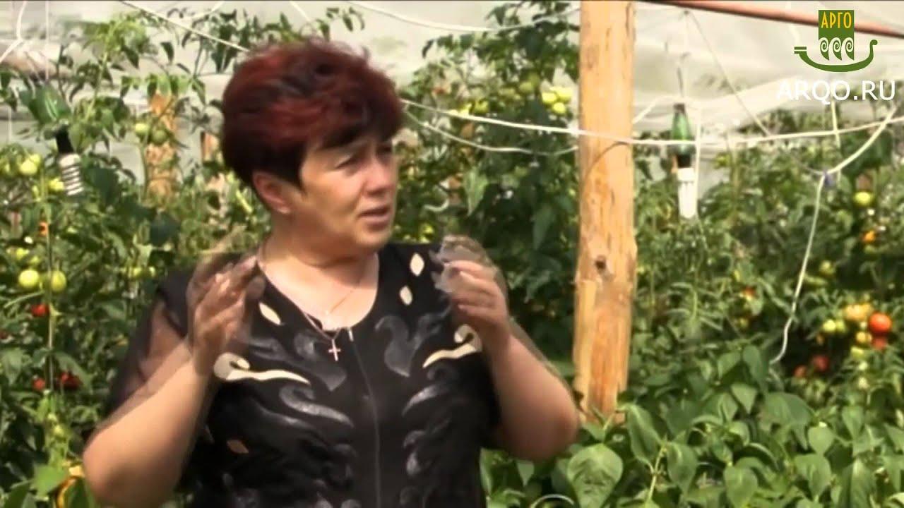 Выращивание ягоды годжи. Делимся опытом. (+Субтитры) Садовый центр .