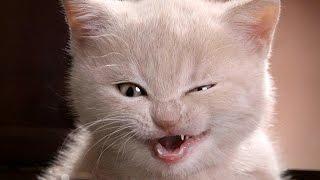 Хитрый жадный КОТ. Tricky greedy CAT