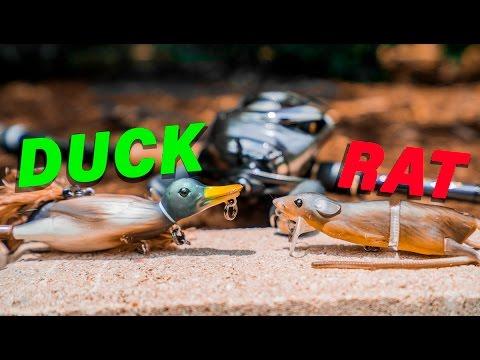 Baby Duck Vs. Rat Lure Fishing Challenge