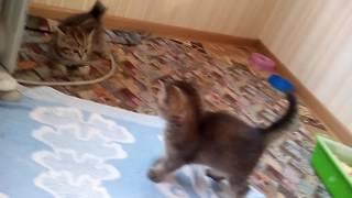 Котята: мальчик и девочка