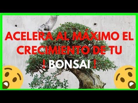 como-acelerar-el-crecimiento-de-tu-bonsai-fÁcil-y-rÁpido-(muy-bien-explicado)😱🌳
