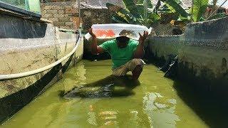 que-sucedi-con-uno-de-los-peces-goldfish-monstruo
