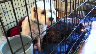 Paranormal Activity Caught On Camera- Dog Opens Crate With Mind Powers