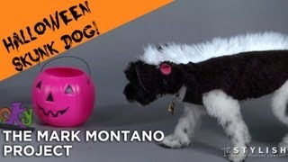 SKUNK DOG COSTUME DIY!