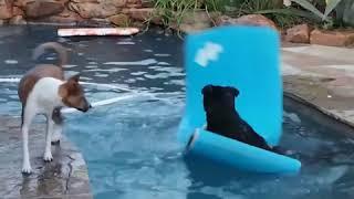 Tsados Amazing Video - Funny Dogs