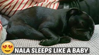 NALA SLEEPS LIKE A BABY