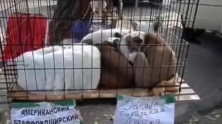 Староконный рынок. Продажа собак. 01.11.14. Odessa.
