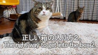 箱の入り方を教えるねこ2-maru-teaches-how-to-get-into-the-box2