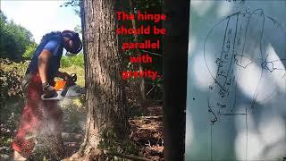How to Cut Down a Tree: Felling Tutorial thumbnail