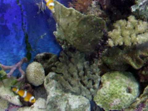 BiOrb Life Marine Saltwater Fish Tank