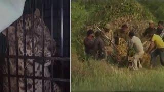 Leopard trapped in barbed wires for 7 hours before rescue