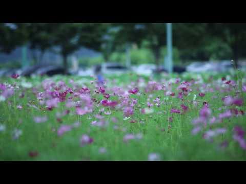 Park Full of Purple Flowers | 4K Relaxing Screensaver
