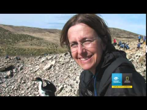 Lindblad South Georgia,Antarctica & The Falklands Expedition Cruise Vacation & Travel Videos