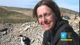 Lindblad South Georgia,Antarctica & The Falklands Expedition Cruise Vacation & Travel Videos