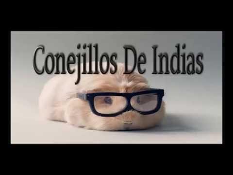 Las escrituras de fer  cap 1 - conejillos de indias