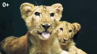 Новые виды животных в Мадагаскаре