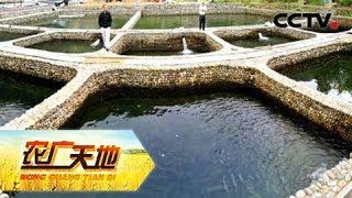 《农广天地》 20180608 流水养出高产鱼 | CCTV农业