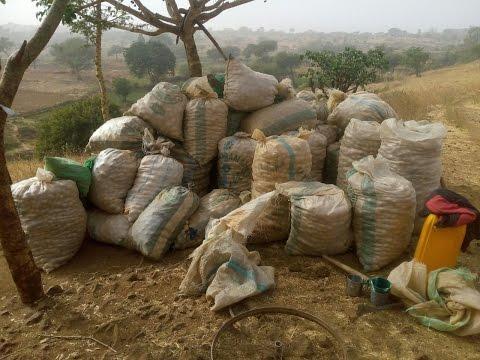 Jos Potato Farming
