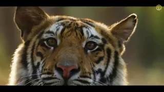 Bandhavgarh National Park And Tiger Reserve | MP Tourism
