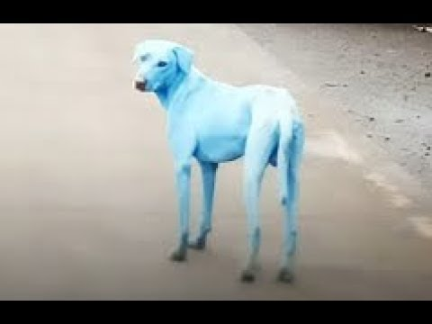 Handfuls of blue dogs are turning heads on the streets of Mumbai