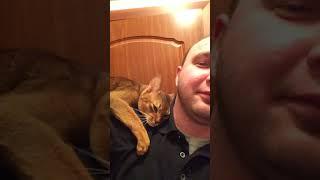 Мой кот Абиссинская кошка