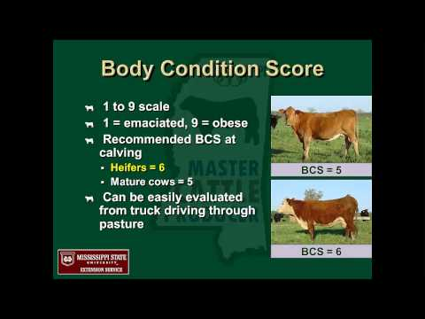 Mississippi Master Cattle Producer Program: Beef Cattle Nutrition