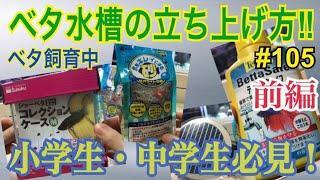 ベタ飼育中‼︎#105 小中学生必見!ベタ水槽立ち上げ方 thumbnail