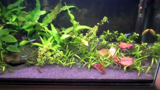 Why Some Aquarium Plants Are Difficult To Care For