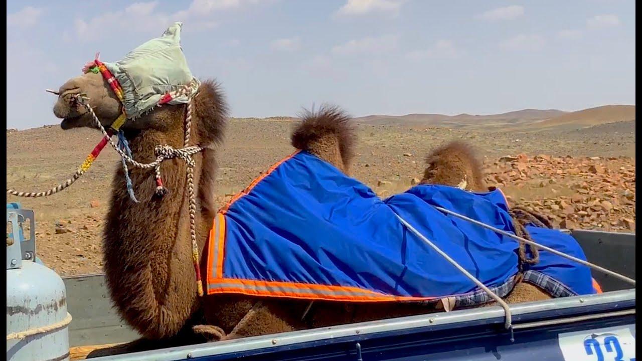Mongolia Fixers 2021 Aerial Reel