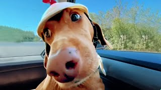Dog Has Fun on Another Level | Funny Pet Videos