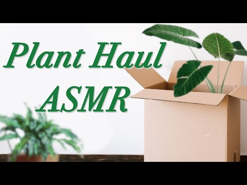 ASMR | 🌱 Plant Haul + Unboxing | Crinkling, Packaging, Sticky Sounds, House Plant ASMR from YouTube · Duration:  30 minutes 1 seconds