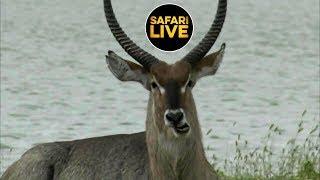 safariLIVE - Sunset Safari - January 19, 2019