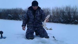 И снова рыбалка Очередной выход за щукой