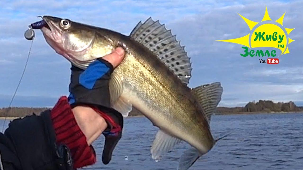 Чем можно ЗАМЕНИТЬ ЭХОЛОТ или дополнить его. Рыбалка на спиннинг осенью. Джиговые приманки.