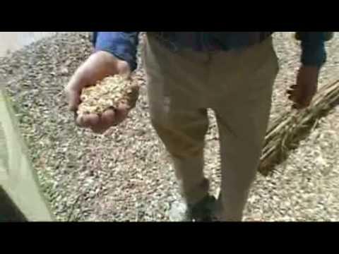 Elephant Grass/Miscanthus/Fennington Fibres