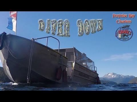 Diver Down - Ft. Exotic Aquatics & Porpoise Bay Charters