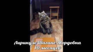 ЛИРИКУМ Шагане Мордовна 10 месяцев - конкурс на видео кастратов